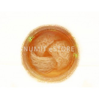 NUMIT Crystal Bird Nest 3pcs 13g with Golden Small Gift Box